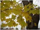 Таки осень