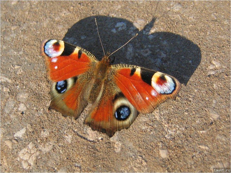 Бабочка-бэтман