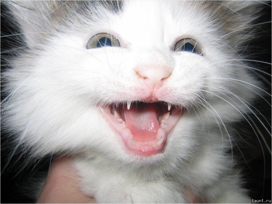 Радостный котенок