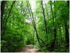 лес между районами
