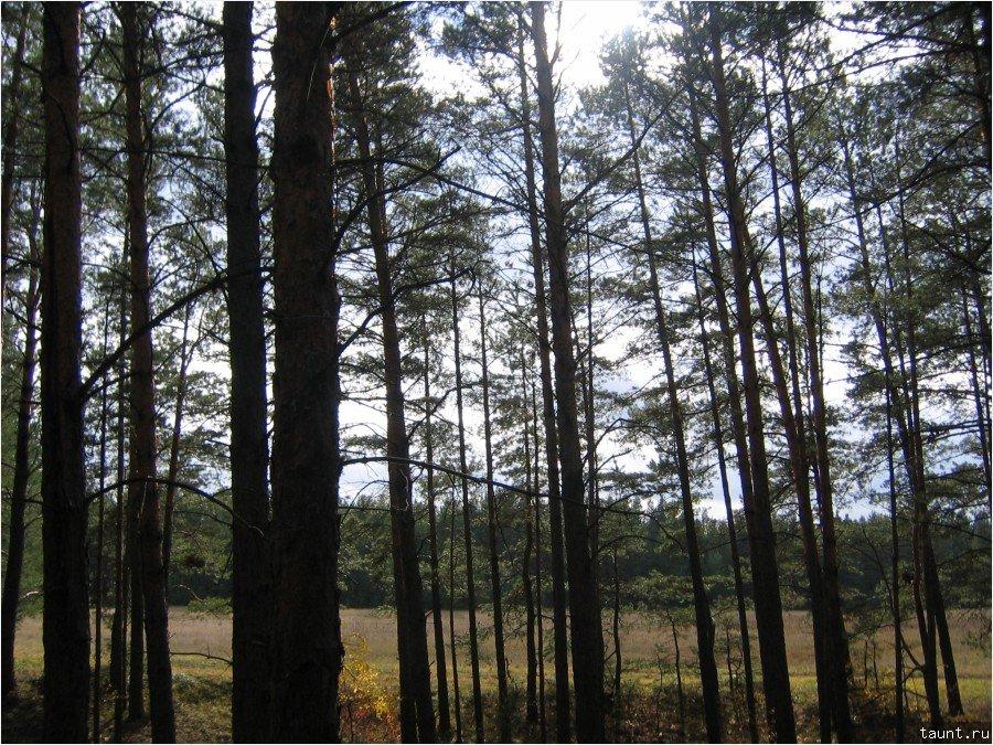 Лес рядом с домом