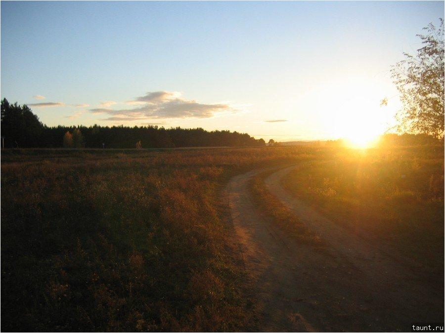 вечножелтая трава