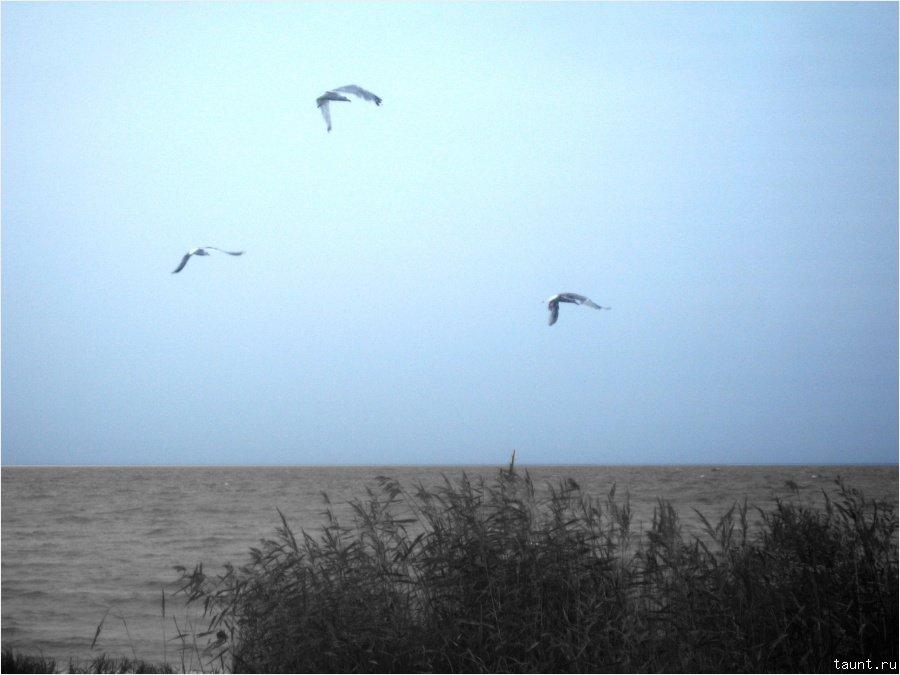 Чайки в небе