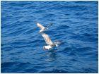 Чайки по-над волнами :)