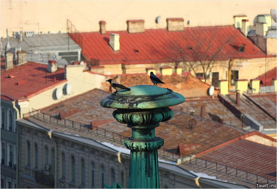 Вороны над крышами Петербурга