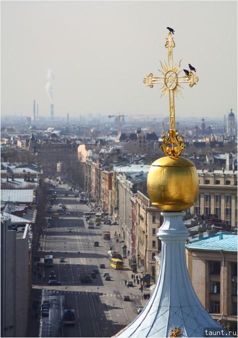 Суворовский проспект и вороны