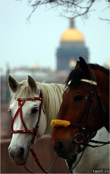 Лошадь и конь на фоне Исаакиевского