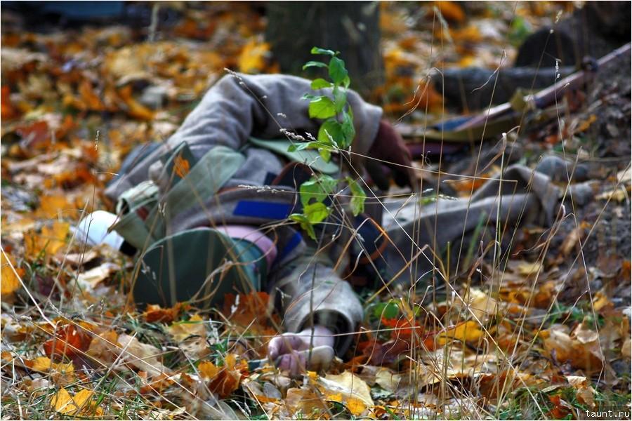 Среди листьев и травы