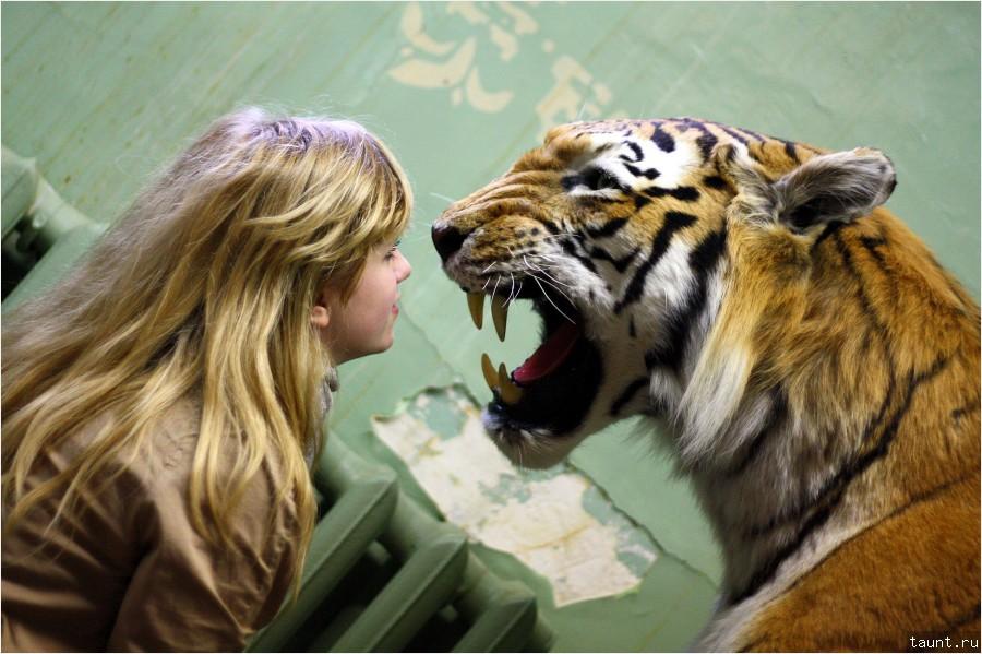 http://taunt.ru/blog/TaunT/1069/Chuchelo_tigra_1-900.jpg