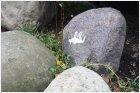Кошка на камне