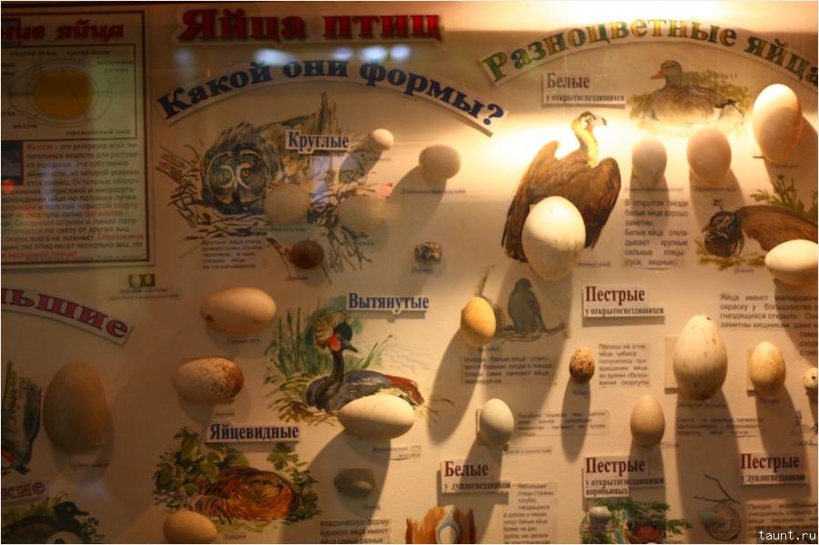 Яйца разных птиц