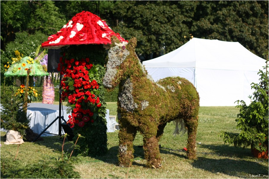 Лошадь и гриб