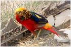 Очень красивая птица